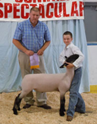 MP Club Lambs Winner